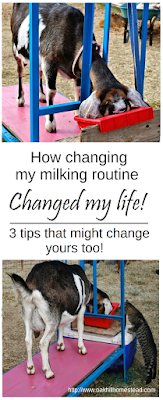 3 changes to your goat milking routine that might change your life on the homestead! From Oak Hill Homestead