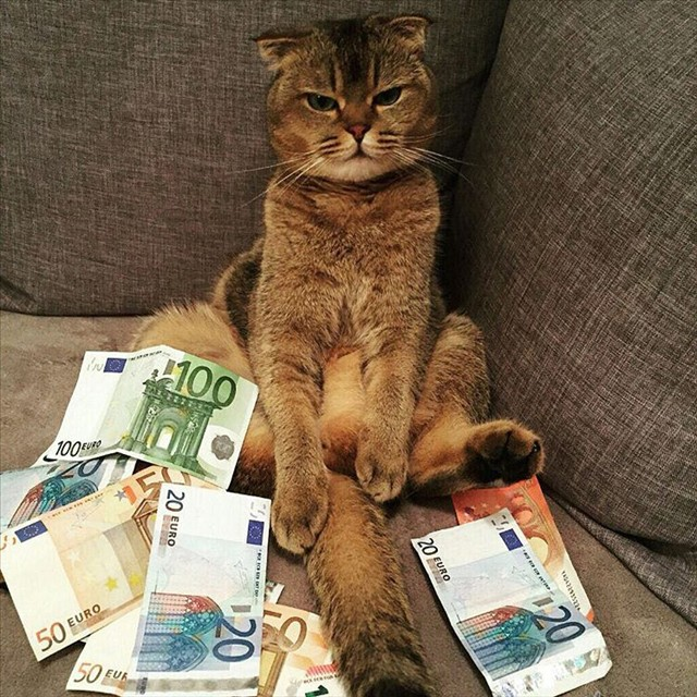Really cool cat