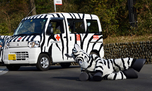 Emergency drill at Tokyo's Ueno Zoo, 2016. Zoo employee dressed up as a plush zebra pretends she has been hit by a dart gun from an employee in a truck and falls to the ground. The Zoo Houdinis and other stories. marchmatron.com