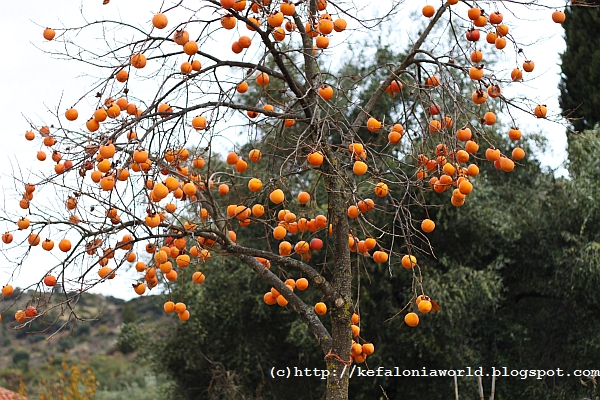 Winter colors of Kefalonia