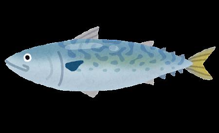 鯖のイラスト