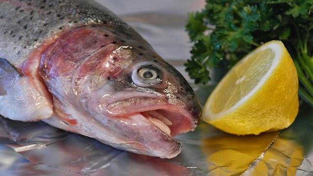 Cara Memilih Ikan yang Segar