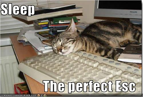 funny-pictures-cat-sleeps-on-the-escape-key4.jpg