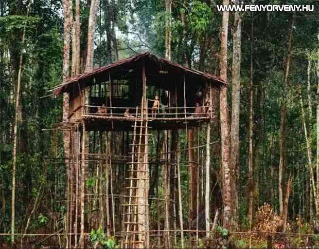 Korowai faházak, Indonézia