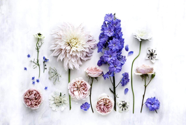 Flower Desktop Important Wallpapers