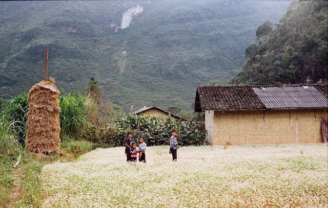Pho Cao - Attractive Buckwheat Flower Season 1