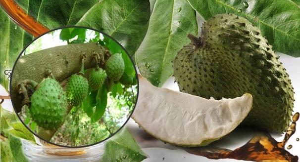 Durian Belanda Rawat Kanser 1000x Lebih Baik Dari Kimoterapi ? Ini Penjelasan Yang Buat Ramai TERKEJUT !!!