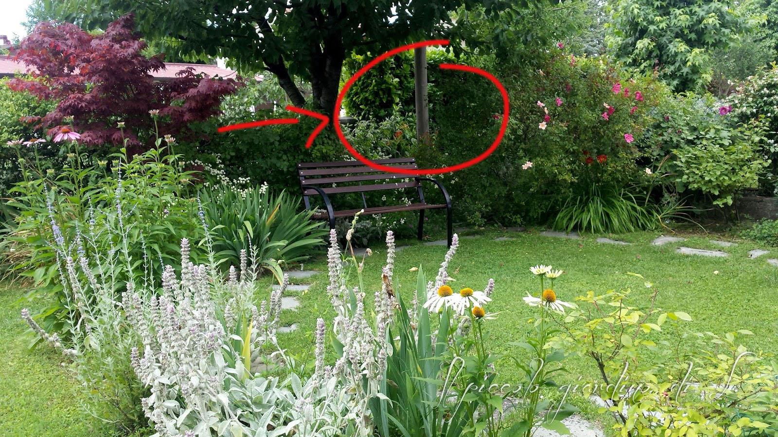 Il piccolo giardino di l for Giardino piccolo