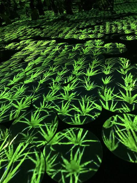 お台場で開催している光の祭典「チームラボ」のイベントの様子です。