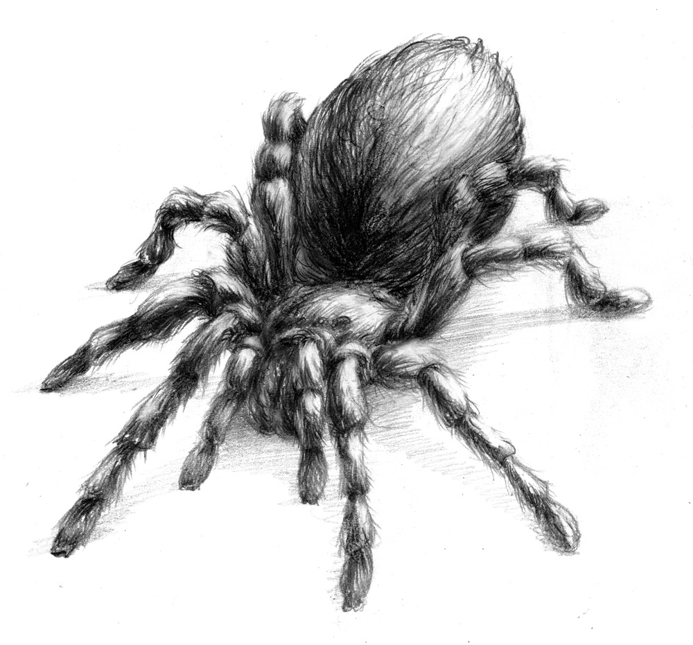 It's just a photo of Versatile Drawing Of Spiders