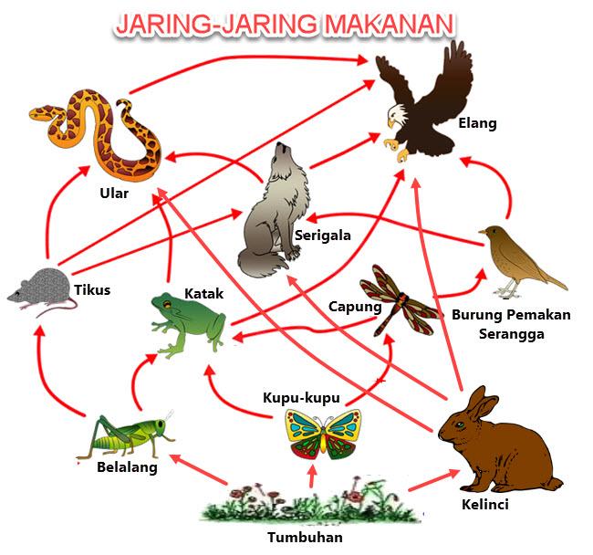 Jaring Jaring Makanan Di Ekosistem Padang Rumput