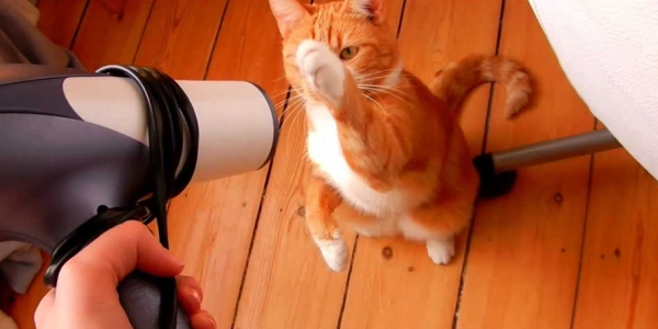 Cats Really Hate Hair Dryers Anyone Knows Why The