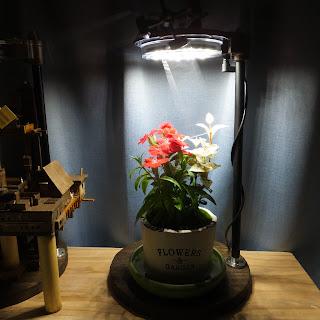 植物鑑賞スタンドで育てるなでしこ