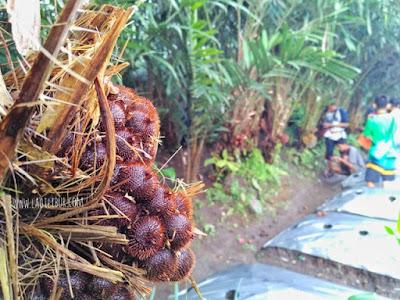 Desa Wisata Pancoh Sleman