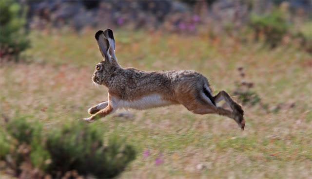 [Ελλάδα]Ασυνείδητοι θανατώνουν τους λαγούς για να μην τους ενοχλούν οι... κυνηγοί