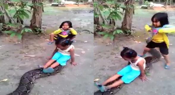 Video Dua Bocah Cilik Naik Ular Berukuran Besar