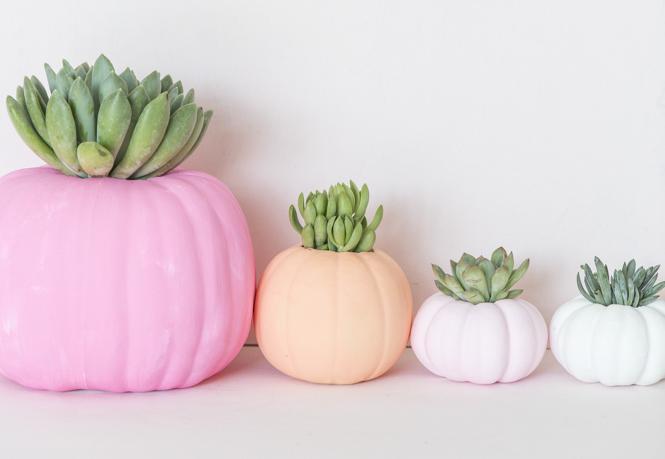 DIY cute pastel pumpkin succulent decor home