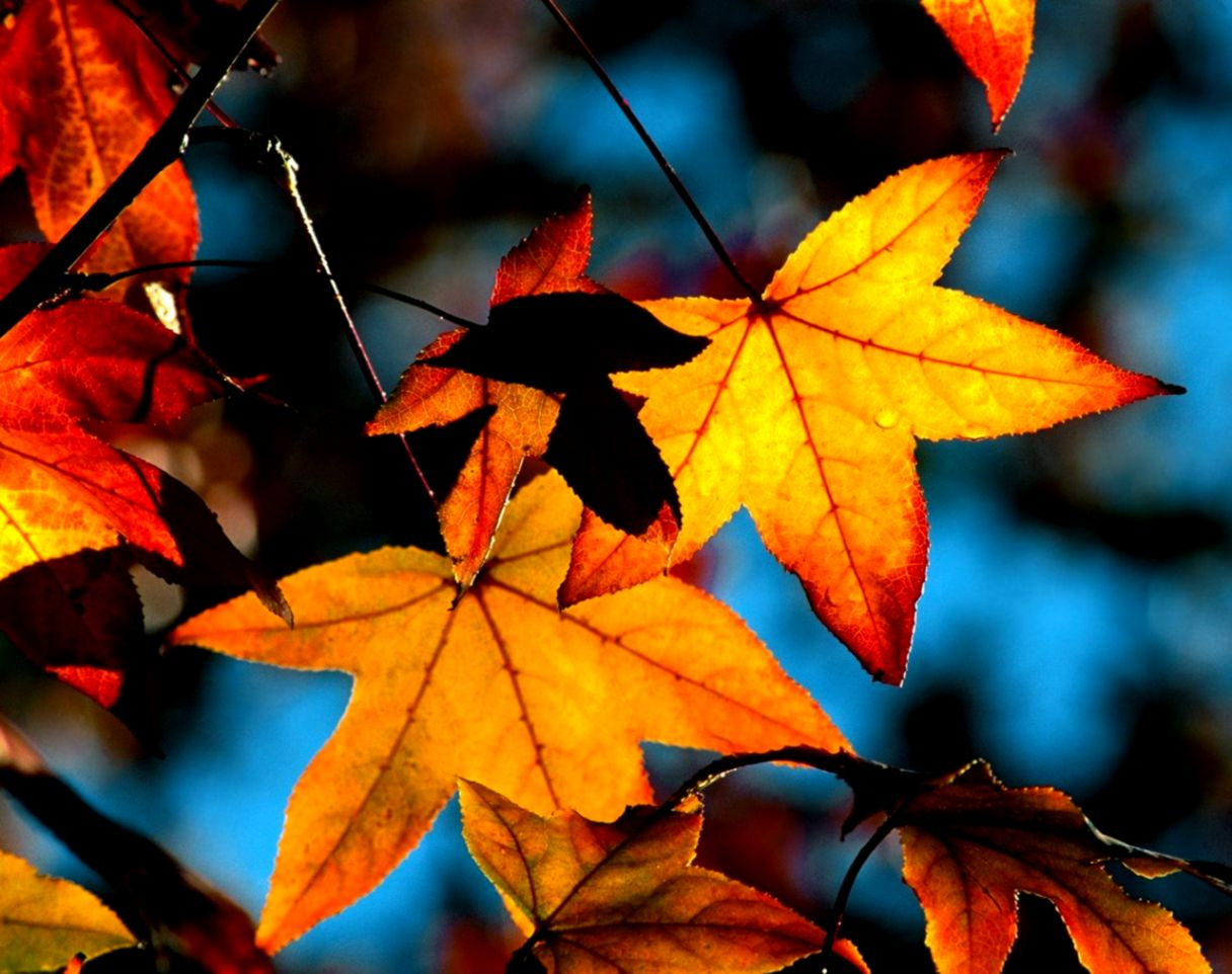 World Of Autumn Latest Hd Wallpapers Free Download