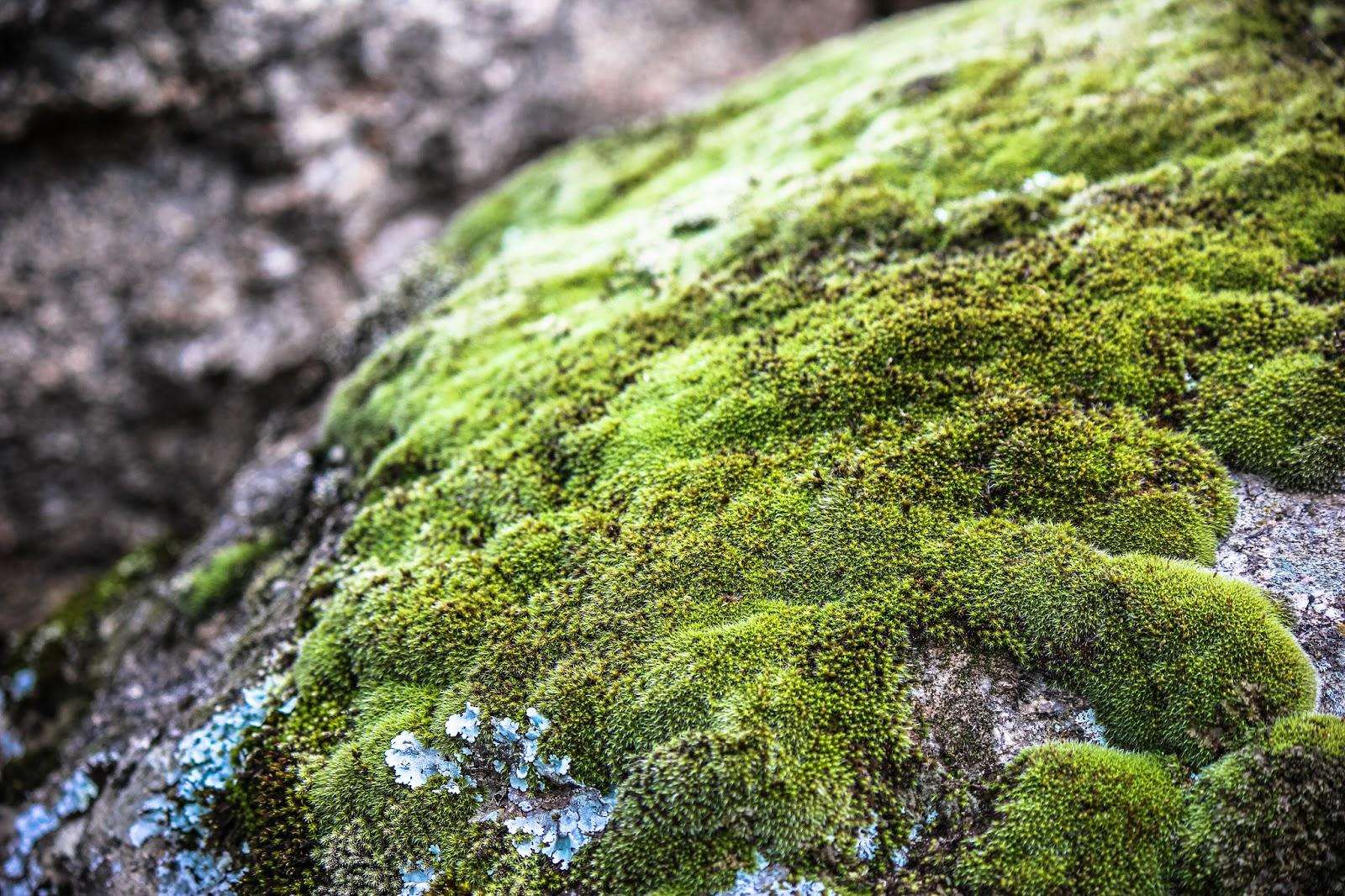 Musgo sobre Piedra