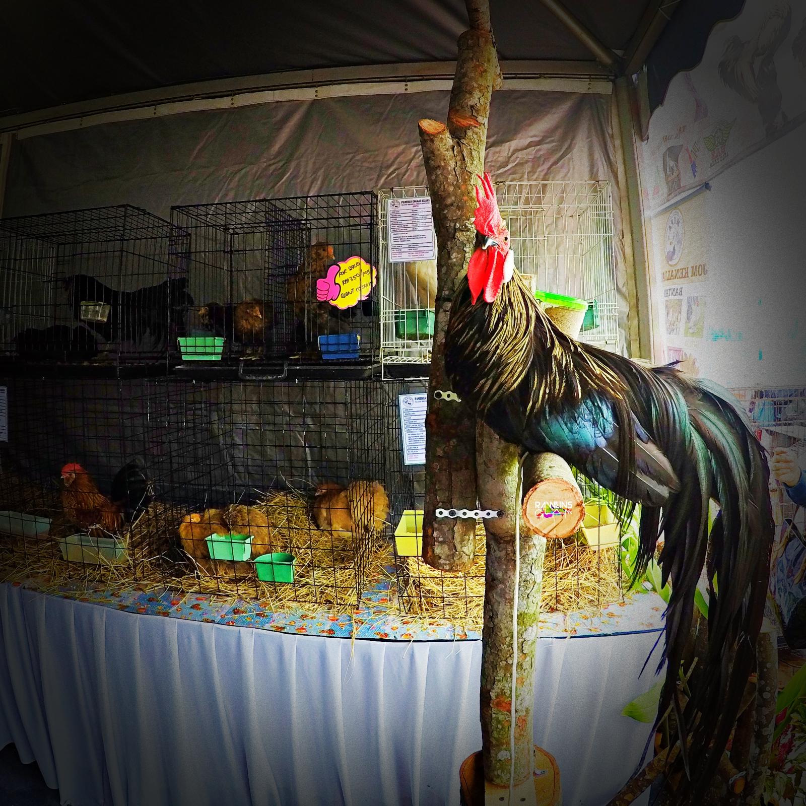 Dato' Sri Ahmad Shabery Cheek, HPPNK 2017, MAEPS, Malaysia Food Festival, Our Food Our Future, MFF 2017, Hari Peladang, Penternak & Nelayan Kebangsaan, Rawlins GLAM,