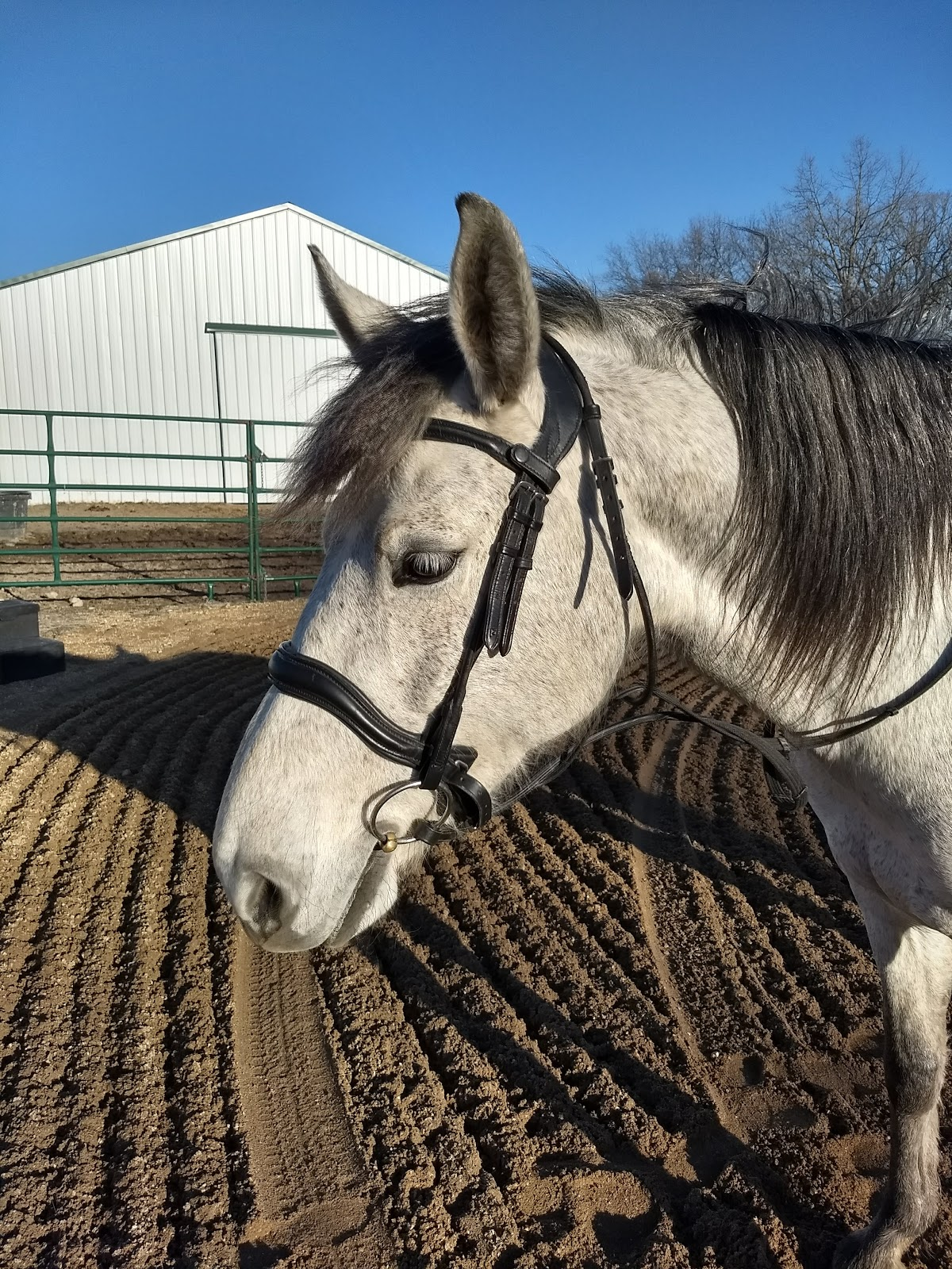 Confessions of a Dressage Barbie: Playing With Tech