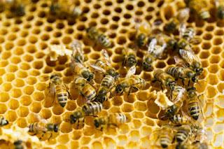 La apiterapia un remedio 100 natural 1 - Las primeras abejas - El Apicultor Español: Actitud y Aptitud Apícola