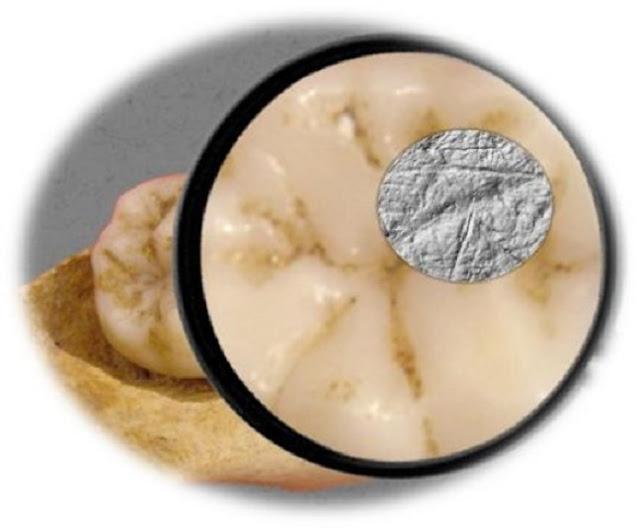 Teeth vs. tools: Neanderthals and Homo sapiens had different dietary strategies