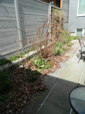 Summerhill Toronto spring backyard garden clean up before by Paul Jung Gardening Services