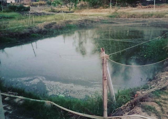 मछली पालन उध्योग कैसे शुरू करे । How to Start Fish Farming Business