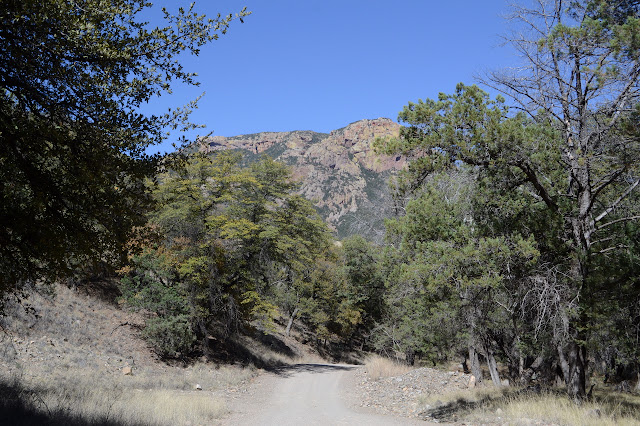 Silver Peak in the trees