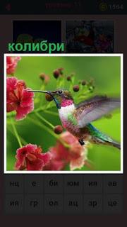651 слов птица колибри прилетела на цветок 11 уровень