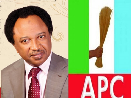 Aso Rock Rodents May Have Eaten Osinbajo's Panel Report on Suspended SGF - Senator Shehu Sani