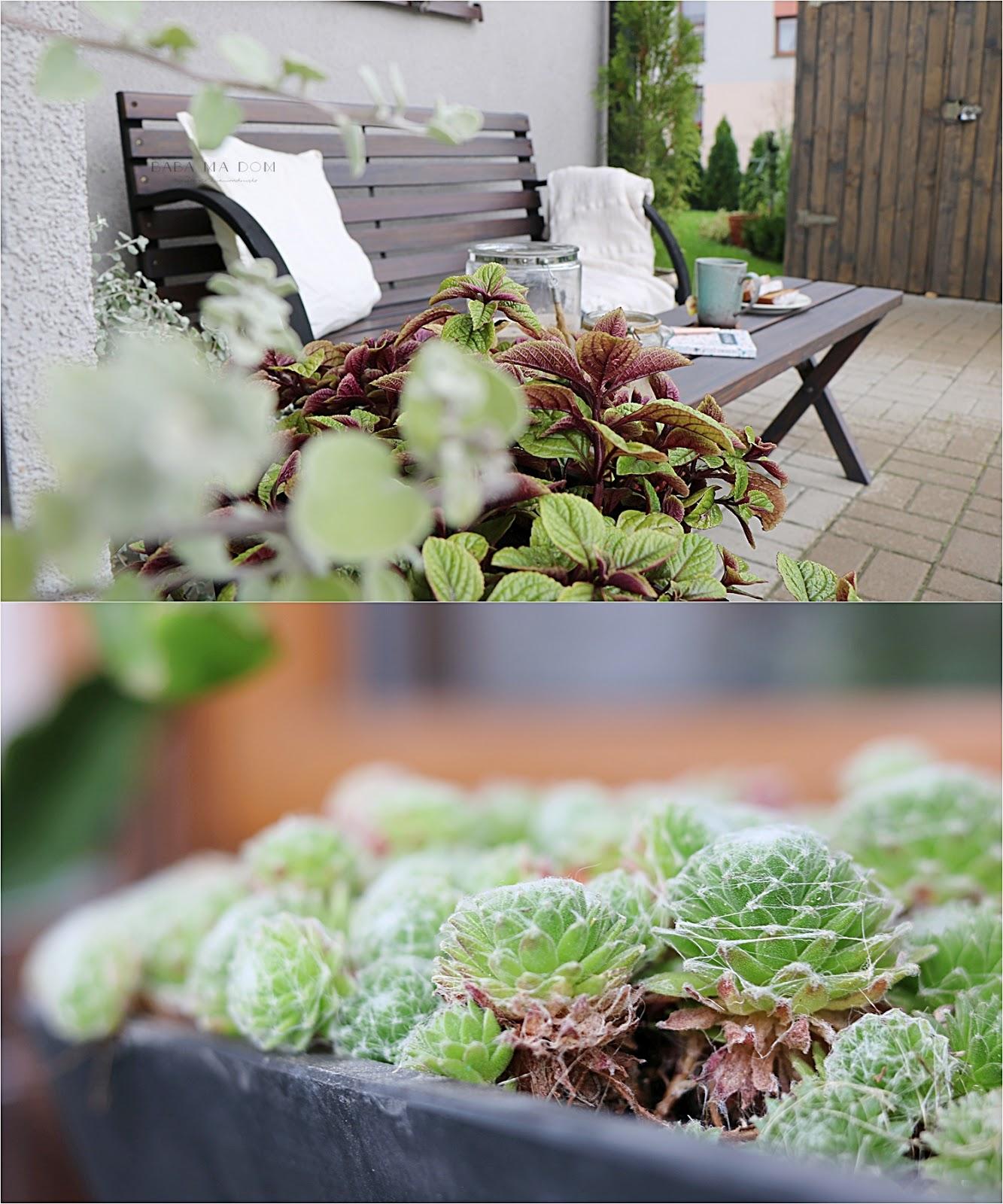 babamadom, DIY, do it yourself, doityourself, drewno, featured, ogród, zrób to sam, malowanie, jesień, majsterkowanie, rośliny,