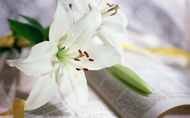 Easter Church Flower