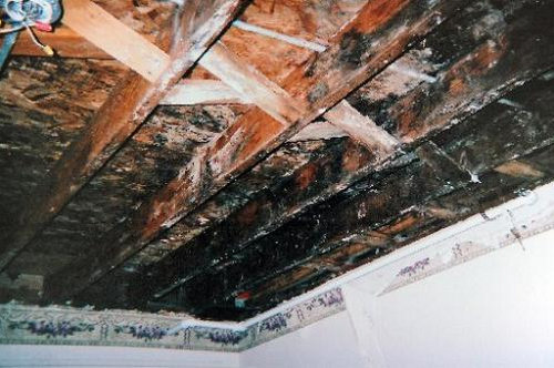 Indoor You Can Find Black Mold In The Bathroom Shower Bat Ceiling Tiles Under Sink Ductwork Carpets Plumbing Pipes