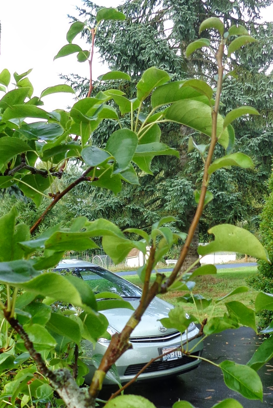 grow a tree for each house in tamil Poems for tree this page has the widest range of tree love and quotes   browse through all tree poems tree poems: 1 /  i told it not, my wrath did grow.