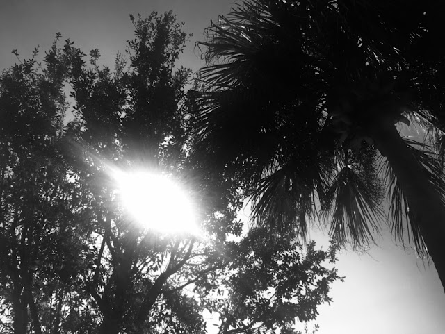 Florida Winter Sunshine