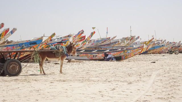 Nouakchott has many donkeys