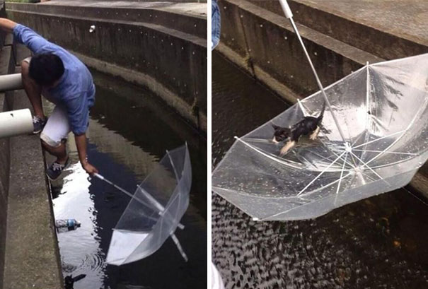 Man saves a drowning kitten with an umbrella.