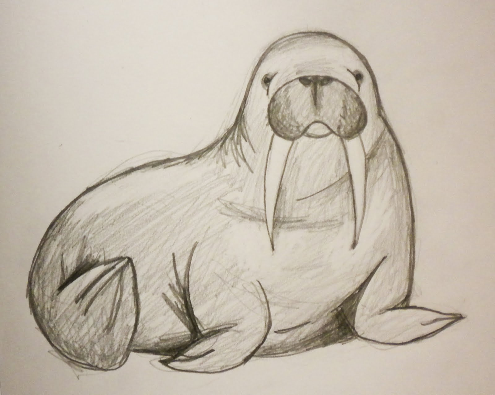 Walrus Face Drawing