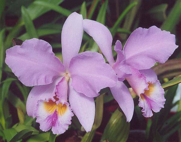 Flora Y Fauna Del Perú: FLORA Y FAUNA DEL PERÚ: FLORA PERUANA