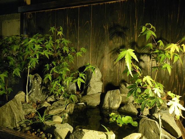 メダカ盆栽 ライトアップ