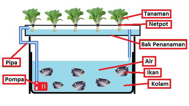 Skema Cara Kerja Aquaponik