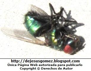 Foto de una mosca tirada en el piso de Jesus Gómez