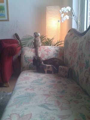 Standby mode cat