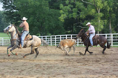 Pairadice Mules Team Roping