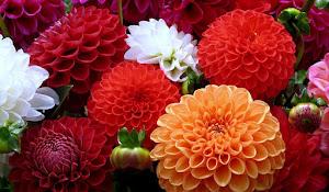 En Güzel Çiçek Resimleri