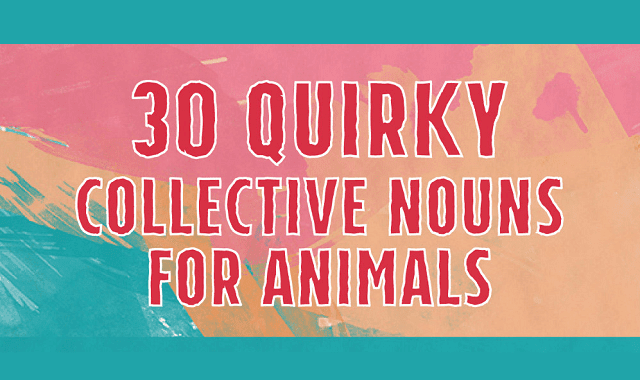30 Quirky Collective Nouns for Animals
