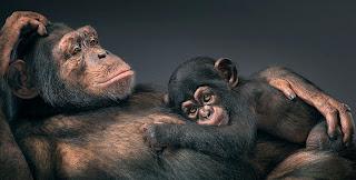 Mamá chimpancé con su cria