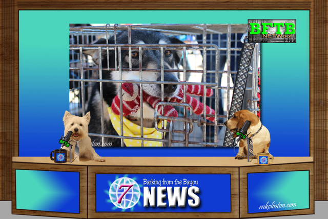 BFTB NETWoof News Adopt Don't Shop